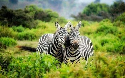 Er du klar på en safari i Kenya?