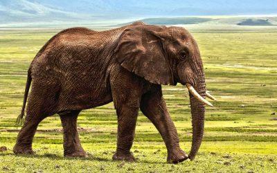 Drømmer du om en safaritur til Sydafrikas savanne?